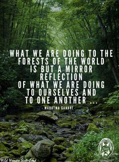 What we are doing to the forests of the world is but a mirror reflection of what we are doing to ourselves and to one another. ~ Mahatma Gandhi
