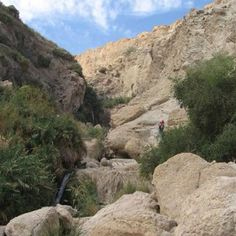 Up the canyon of Ein Gedi, where David, before he was King, hid from King Saul who was trying to kill him.