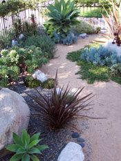 "native garden seen on a Long Beach garden tour. Boulders add ""bones"" to this gar. - backyard - native garden seen on a Long Beach garden tour. Boulders add ""bones"" to this garden! Coastal Gardens, Beach Gardens, Outdoor Gardens, Drought Resistant Landscaping, Drought Tolerant Landscape, Landscape Design, Garden Design, Path Design, Desert Landscape"