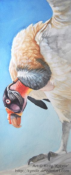 King Vulture by Kyndir.deviantart.com on @deviantART