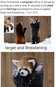 Funny Animal Jokes, Cute Funny Animals, Funny Animal Pictures, Funny Cute, Hilarious, Really Funny Memes, Stupid Funny Memes, Funny Relatable Memes, Cute Bear