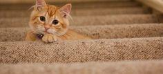 Ansambluri de joacă cu sisal pentru pisici