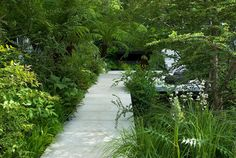Contemporary concrete path detailing and lush woodland planting | Andy Sturgeon, Chelsea 2008