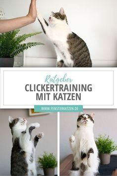 """Clickertraining mit Katzen - Die meisten unter euch werden wohl schon das ein oder andere Mal vom """"Clickertraining"""" im Zusam - Funny Animal Memes, Cat Memes, Funny Cats, Funny Animals, Cute Animals, Animals And Pets, Baby Animals, Pet Dogs, Dog Cat"""
