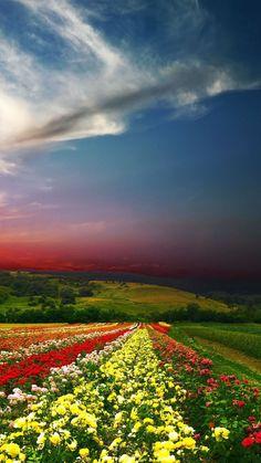 Download Wallpaper 720x1280 Sunset, Field, Flowers, Landscape Samsung Galaxy S3 HD Background