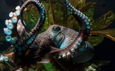 Octopus photography, pretty and great detail