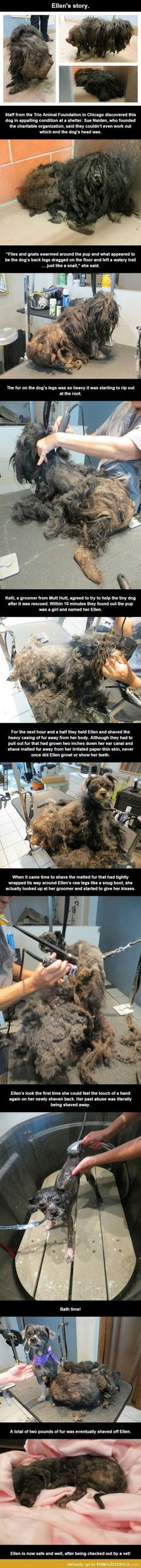Watch a dog come alive. How anyone could leave a dog in that state :(