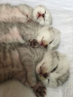 Three baby cats of Da Sang ^o^
