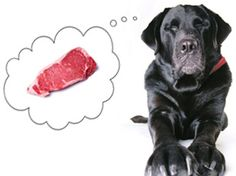 How To Keep Your Dog Healthy? http://petjunctiondirectory.com/keep-dog-healthy/