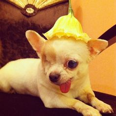 A smart hat can finish any outfit, just ask Pirate! | Yogurt The Pirate Dog Brings Inspiration To Your Instagram Feed