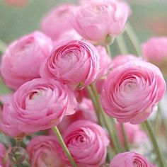 Bloom, Flower Farm, Spring Flowers, Flower Power, Planting Flowers, Flower Arrangements, Beautiful Flowers, Wedding Flowers, Dahlia