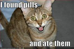I found pills... and at them...