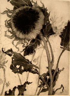 "Intaglio print by Katie Degroot; part of series of flowers and plants ""past their prime""."