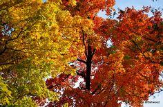 Color of autumn....