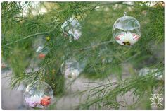 Glass orbs with flower heads suspended from tree branches.