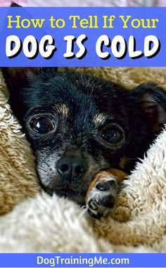 How to tell if your dog is cold. Cold weather is here! Learn the dangers of the cold, the warning signs from your dog to look for, and how you should handle it all in this article!