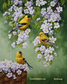 Oil painting of goldfinches and blossoms, by wildlife artist Crista Forest, ForestWildlifeArt.com. Fine Art Prints available #OilPaintingBirds #OilPaintingForest