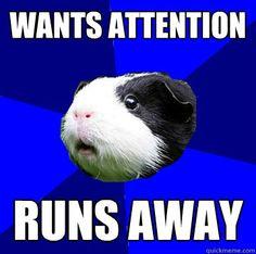 Jumpy Guinea Pig meme