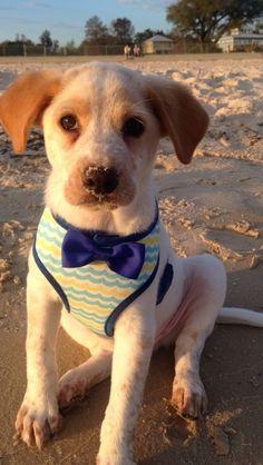 36 Perros felices para todas las personas que estén teniendo un mal día