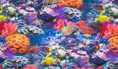 Tricot stof sea life, Digitaal print van het merk Qjutie Kids. De leukste en hipste tricot kinderstoffen shop je online via Stoffen Online.