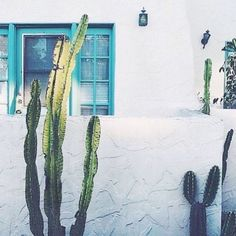 SUMMER COLORS and cactus lovers everywhere  Via Pinterest
