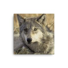WOLF HAND STRETCHED CANVAS PRINT