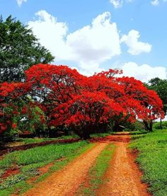 Beautiful Streets, Beautiful World, Beautiful Places, South America Map, Jesus Pictures, Colorful Trees, Nature Tree, Autumn Art, Amazing Nature