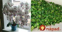 Každý, kto pestuje kvety alebo zelené izbové rastliny túži po tom, aby sa týmto živým ozdobám darilo čo najlepšie.