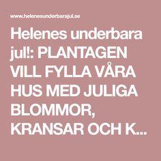 Helenes underbara jul!: PLANTAGEN VILL FYLLA VÅRA HUS MED JULIGA BLOMMOR, KRANSAR OCH KVISTAR.