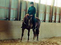 Clicker Training For Your Horse: Clicking the First Rides
