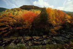 الصورة: Fall is around the corner! Experience the brilliance of autumn colors in…