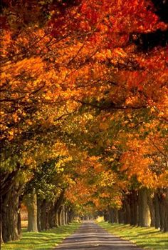 Where and When to See the Best Fall Color Across the Southeast US: Virginia - Peak Fall Color Guide