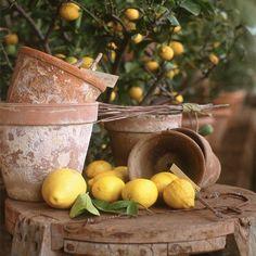 When life gives you lemons, you make limoncello.