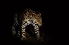 dana allen vulnerable focusing on wildlife vulnerable masai mara kenya ...