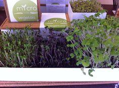 Grow Box Microvegetais Trio Life in a bag