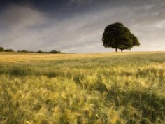 nature field tree green sky (to get full size image visit the site)