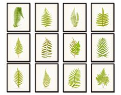 Vintage Ferns Print Set No. 2- Gallery Wall Art