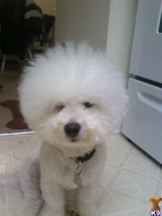 Look what I found browsing the net.  LOl  his name is BamBam  :)