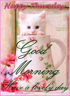 Good morning Thursday kitten
