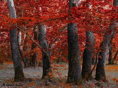 Dressed in red by Amalia Lampri on 500px