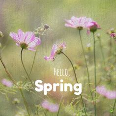 Hello Spring for instagram with wild flowers