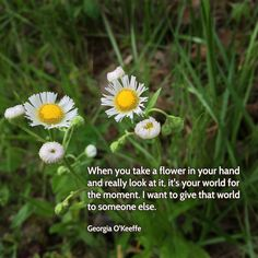 """""""When you take a flower in your hand and really look at it, it's your world for the moment. I want to give that world to someone else. Most people in the city rush around so, they have no time to look at a flower. I want them to see it whether they want to or not."""" —Georgia O'Keeffe  Photo: Wildflowers blooming in the forest, Brown County, Indiana. 2015."""