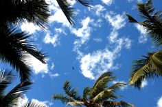 Sacred is in ordinary. #Goa, #India #MotherIndia. February, 2014 #photography #detail #sky #life #earth #love #live #coconuttree #clouds