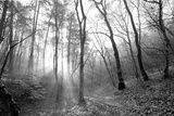 https://www.allposters.com/-sp/Autumn-Forest-With-Fog-And-Lights-Posters_i10873699_.htm?UPI=POIORX0&PODConfigID=4991921