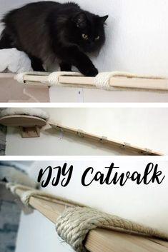 Ein tolles Wandbrett für Katzen ist ganz simpel und schnell selbstgemacht. Wenn auch deine Katzen einen tollen Do it yourself Catwalk brauchen, dann findest du die Anleitung für dieses DIY Katzen-Projekt hier: http://blogkatzen.de/diy-wandbrett-fuer-katzen/.