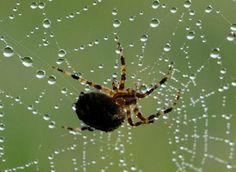 Telas de araña para la cirugía humana