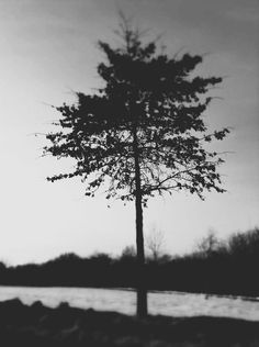 Nature Photography  Surreal Black and White Photo by Kristybee