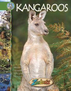 Kangaroos - Zoobooks at theBIGzoo.com, a family-owned gift shop with 12,000+ animal-themed items.