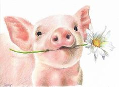 'Cute Baby Pig with Daisy Flower' Poster by DorysStories Cute Baby Pigs, Cute Piglets, Baby Animal Drawings, Cute Drawings, Baby Farm Animals, Cute Animals, Pig Sketch, Fluffy Cows, Pig Drawing