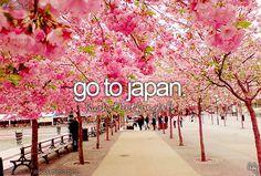 VISIT JAPAN : [Tokyo & Kyoto, voir de vraies geishas et maikos, nourrir des daims en liberté, admirer les érables, manger de la tempura, ...]